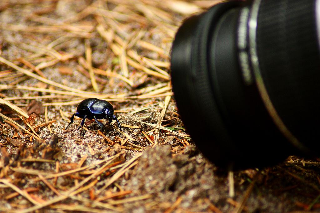 Camera foto macro